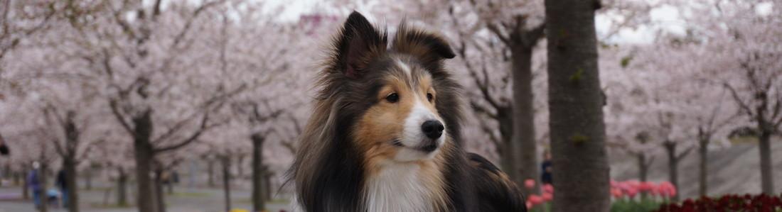 ペットシッター CHERRY-PET